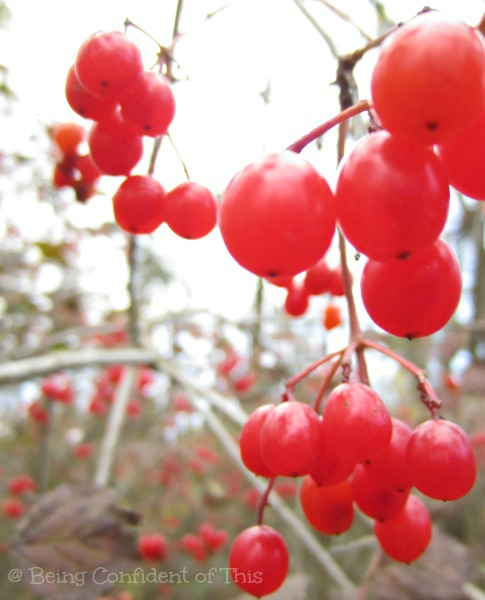 red berries, winter, hope