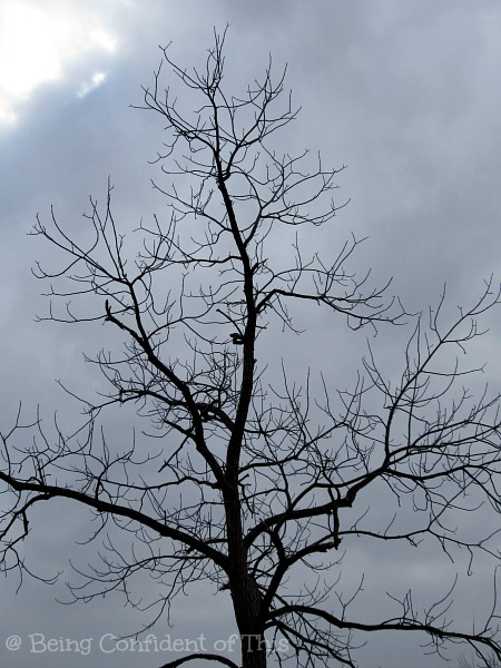 bare tree, winter, disappointment
